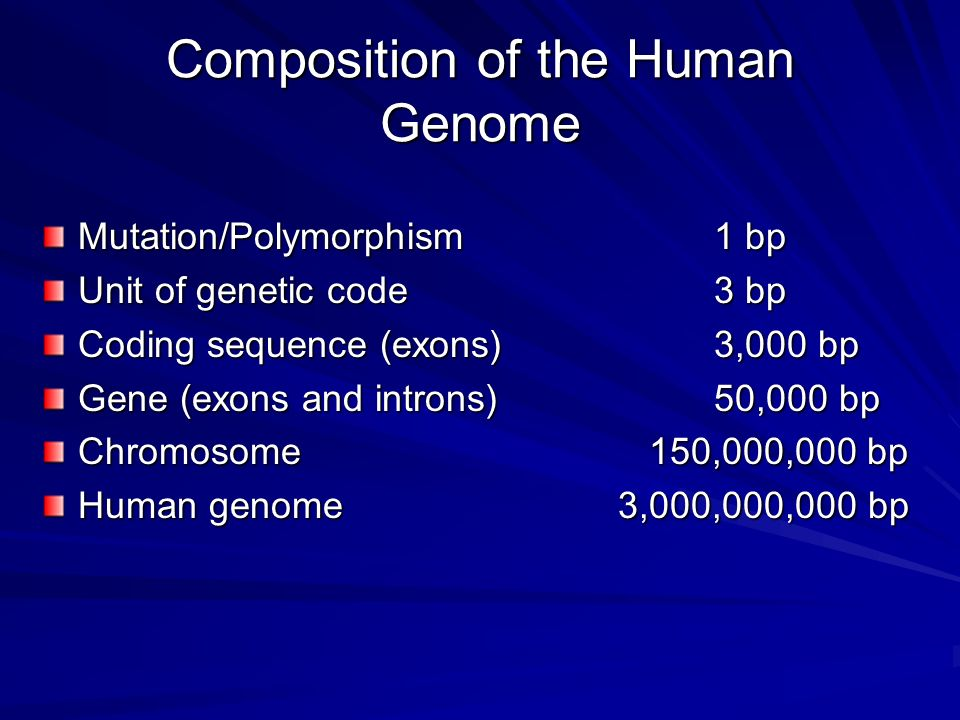 Composition of the Human Genome
