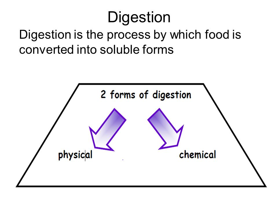 notes on digestion Comprehensive revision notes for gcse exams for physics, chemistry, biology   food enters the mouth and digestion begins with the teeth breaking down the.