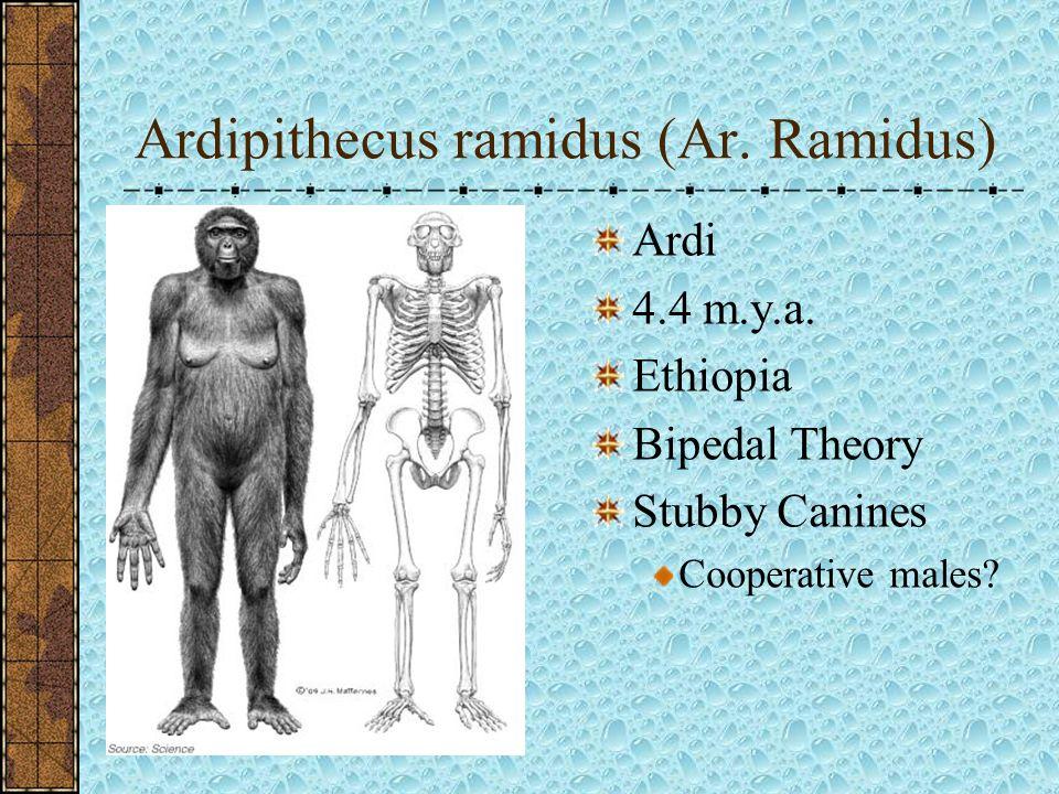 Ardipithecus ramidus (Ar. Ramidus)