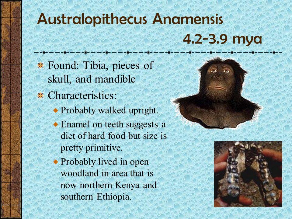Australopithecus Anamensis 4.2-3.9 mya