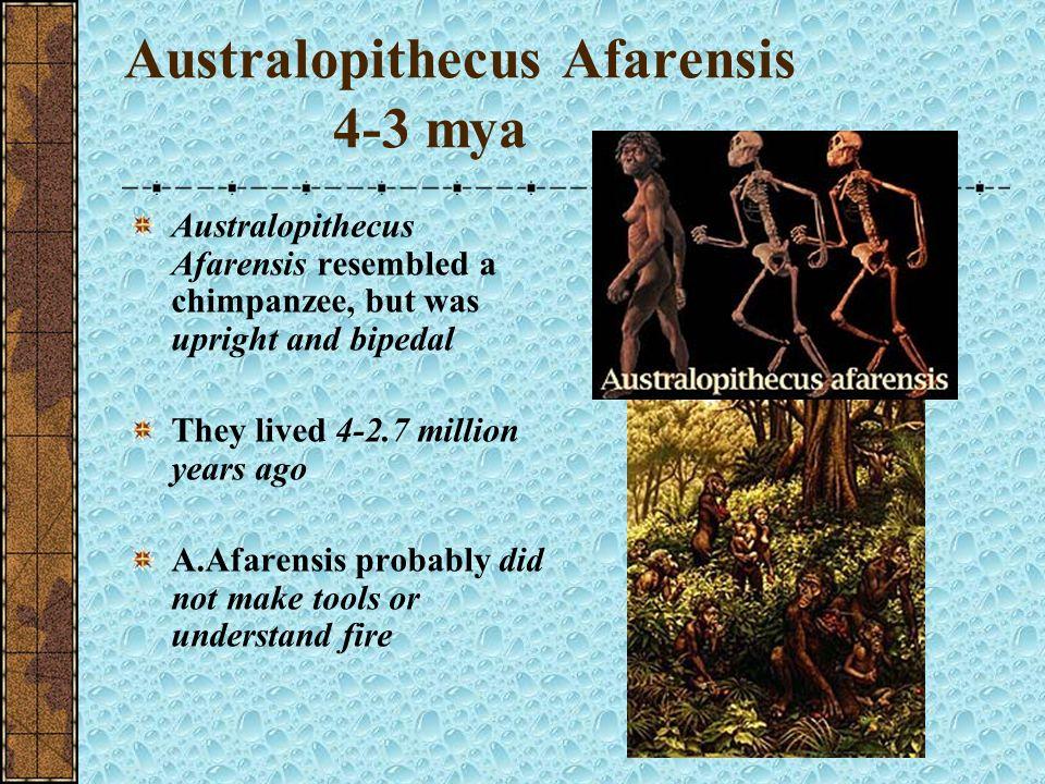 Australopithecus Afarensis 4-3 mya