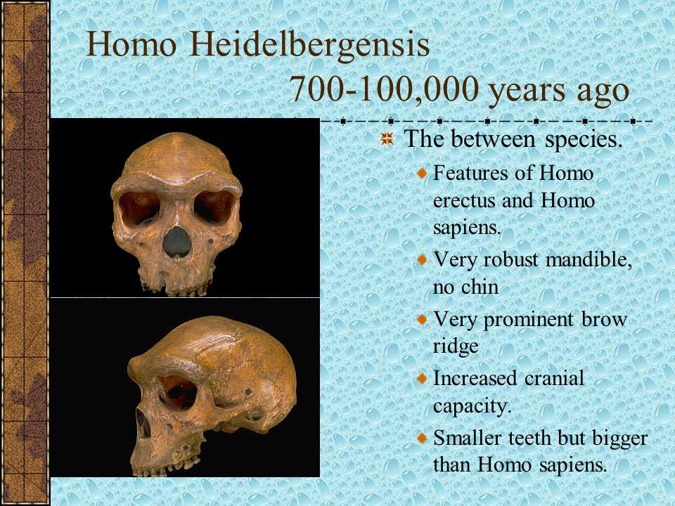 Homo Heidelbergensis 700-100,000 years ago
