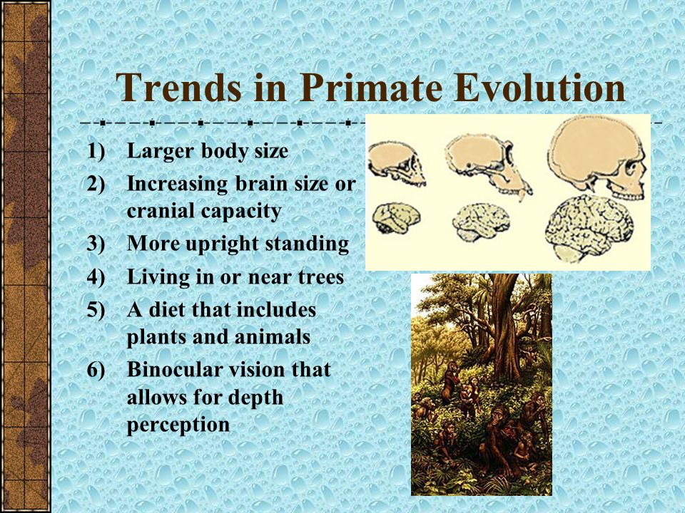 Trends in Primate Evolution