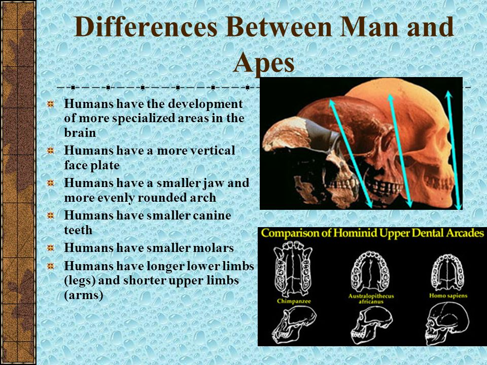 Differences Between Man and Apes