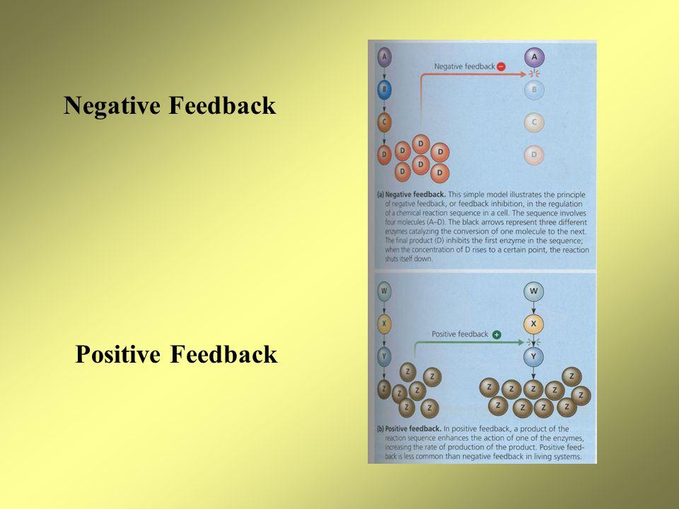 Negative Feedback Positive Feedback