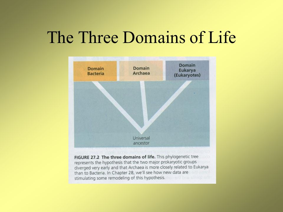 The Three Domains of Life