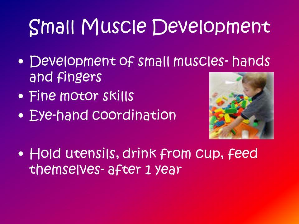 Small Muscle Development