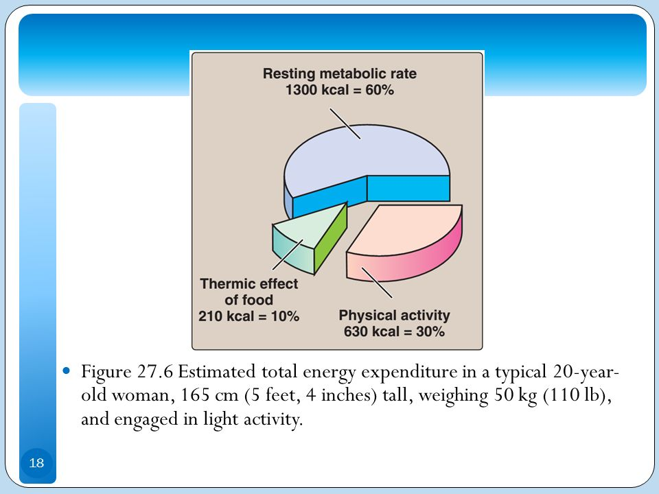 Figure 27.6 Estimated total energy expenditure in a typical 20-year- old woman, 165 cm (5 feet, 4 inches) tall, weighing 50 kg (110 lb), and engaged in light activity.