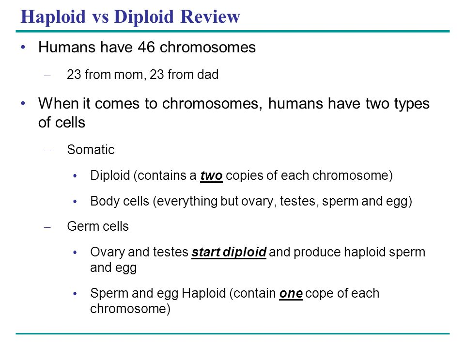 Haploid vs Diploid Review