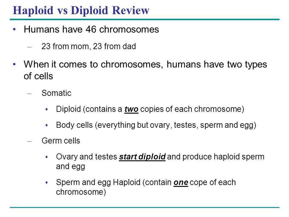 Haploid vs Diploid Review
