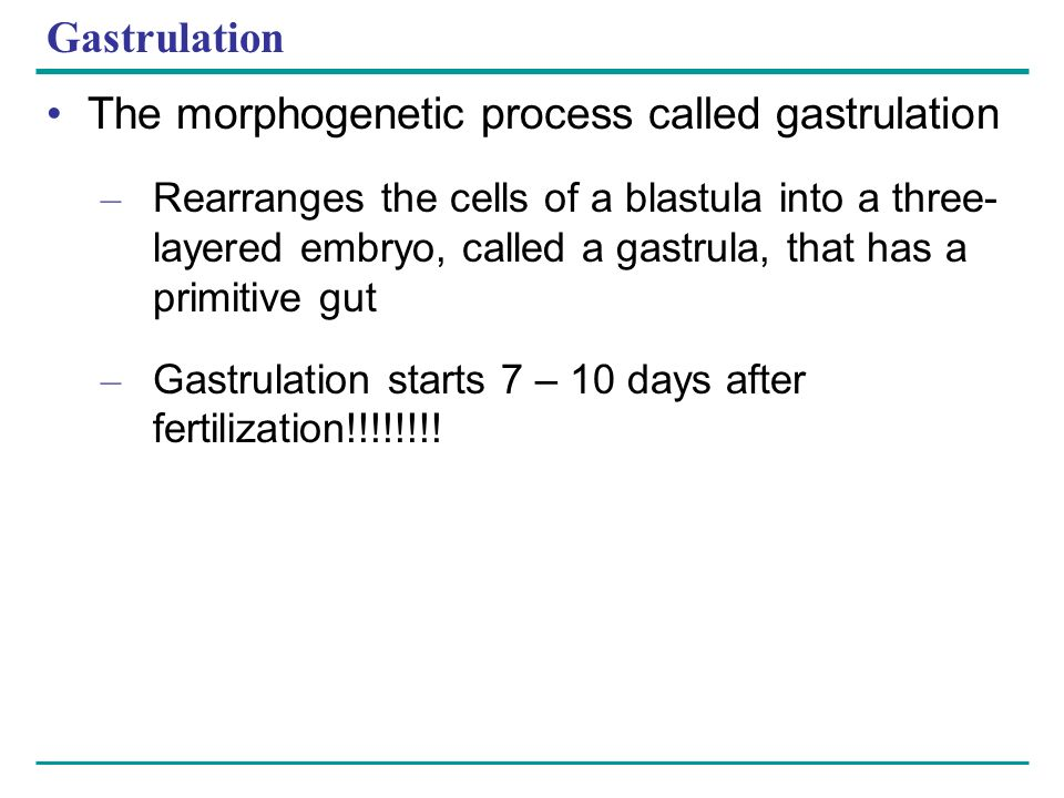 The morphogenetic process called gastrulation