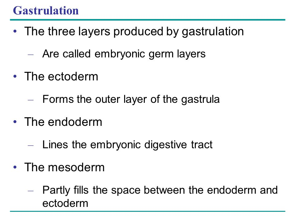 Gastrulation The three layers produced by gastrulation The ectoderm