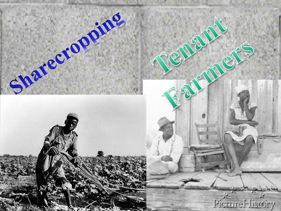 Tenant Farmers Sharecropping