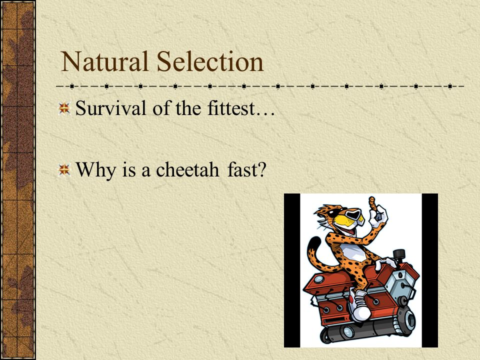 Natural Selection Survival of the fittest… Why is a cheetah fast