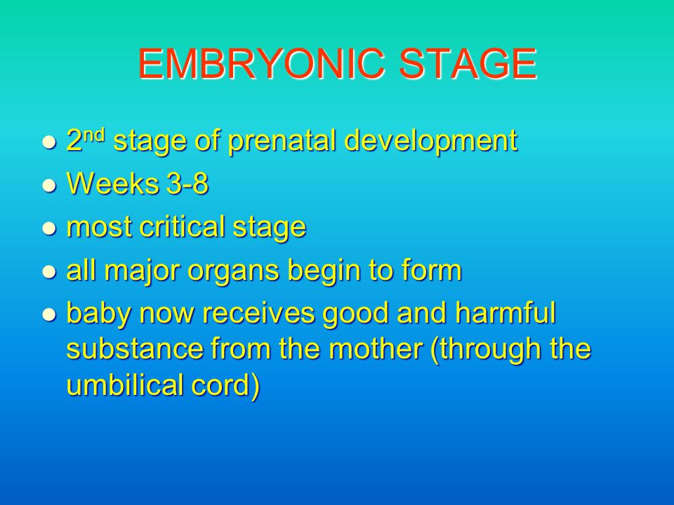EMBRYONIC STAGE 2nd stage of prenatal development Weeks 3-8