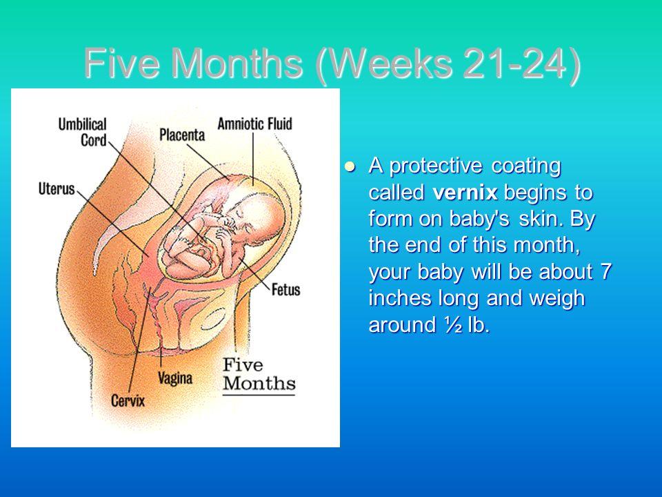 Five Months (Weeks 21-24)