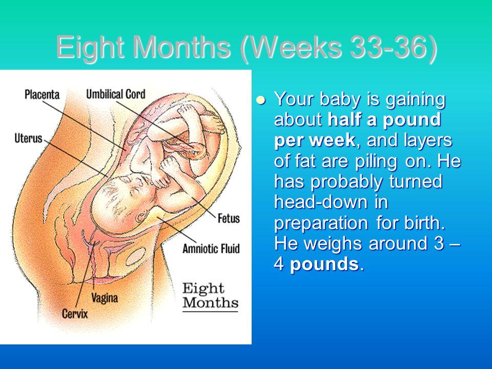 Eight Months (Weeks 33-36)