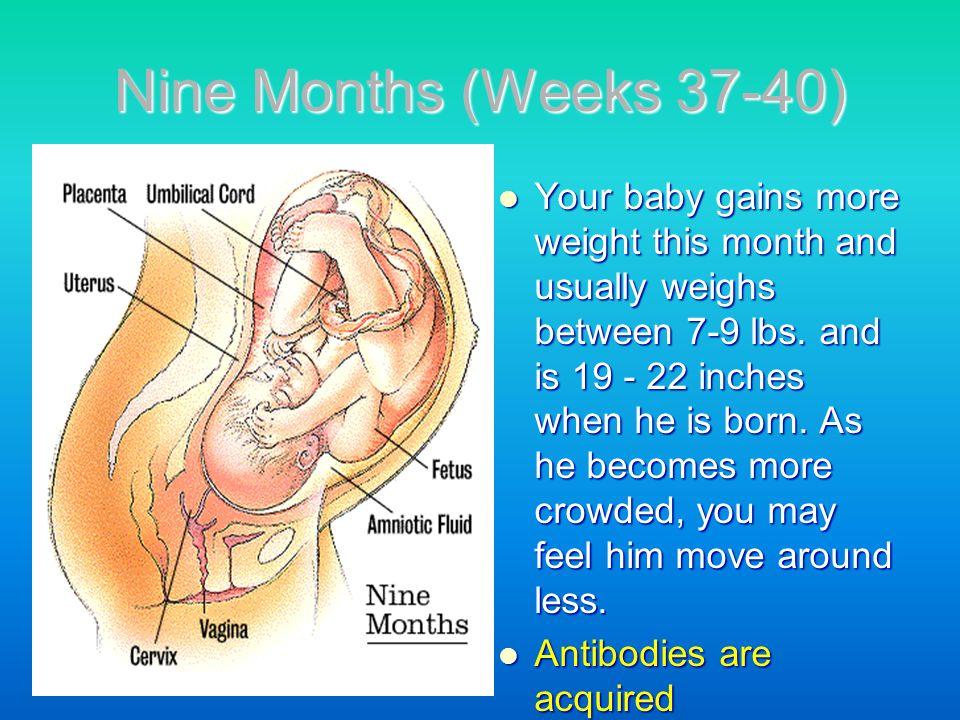 Nine Months (Weeks 37-40)