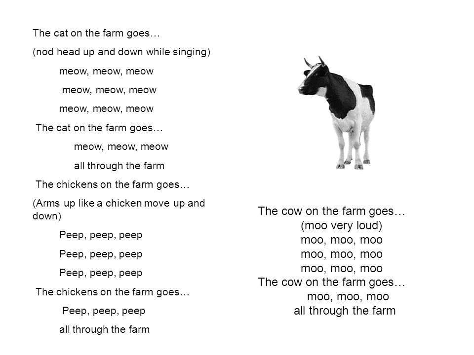 The cow on the farm goes… (moo very loud) moo, moo, moo