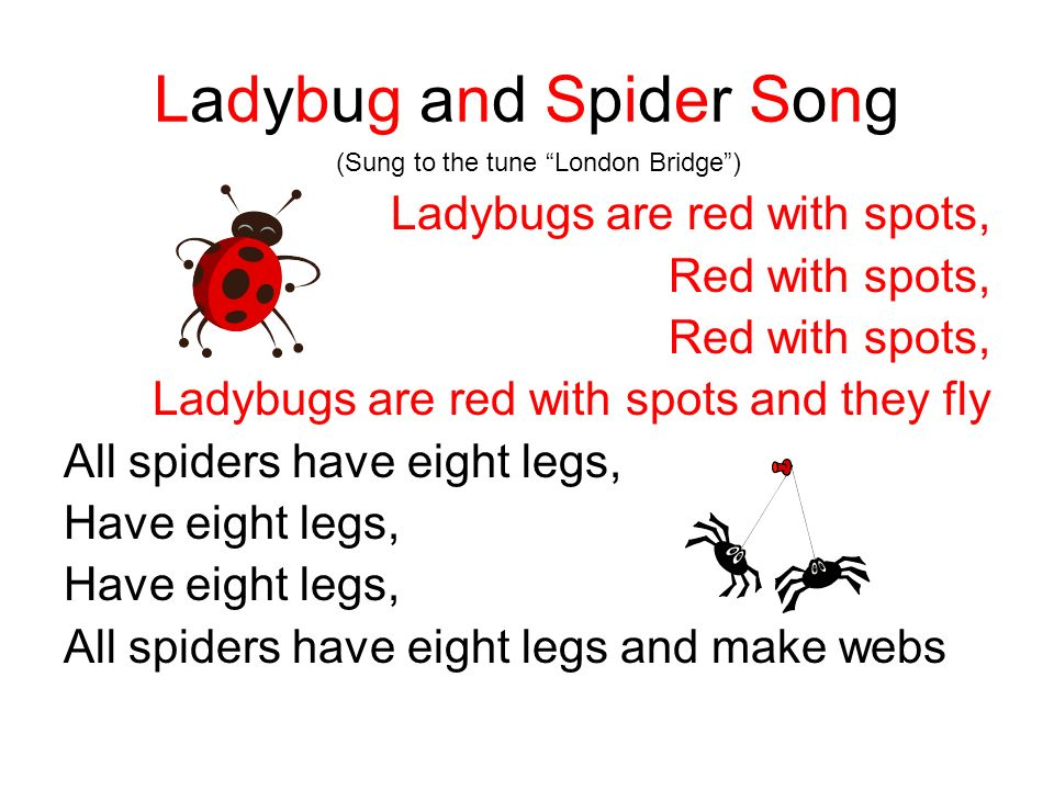Ladybug and Spider Song