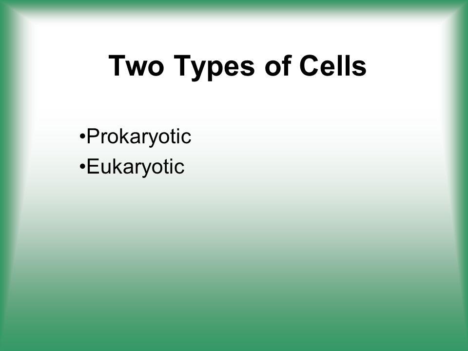 Prokaryotic Eukaryotic