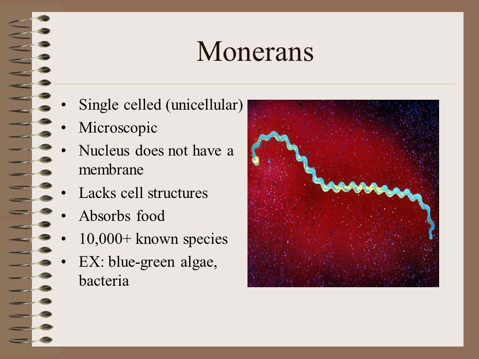 Monerans Single celled (unicellular) Microscopic