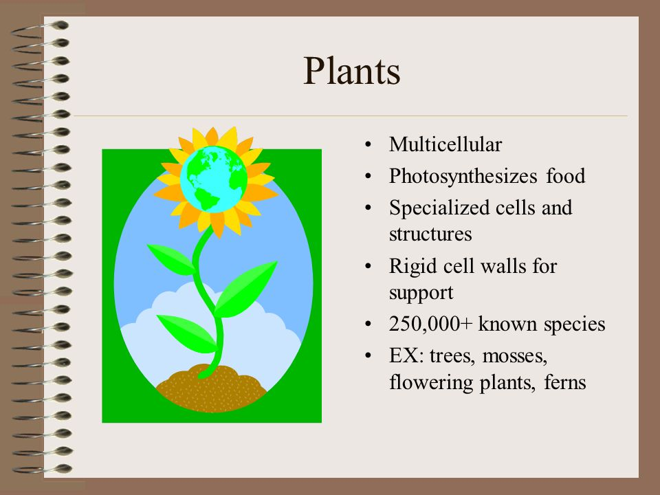 Plants Multicellular Photosynthesizes food