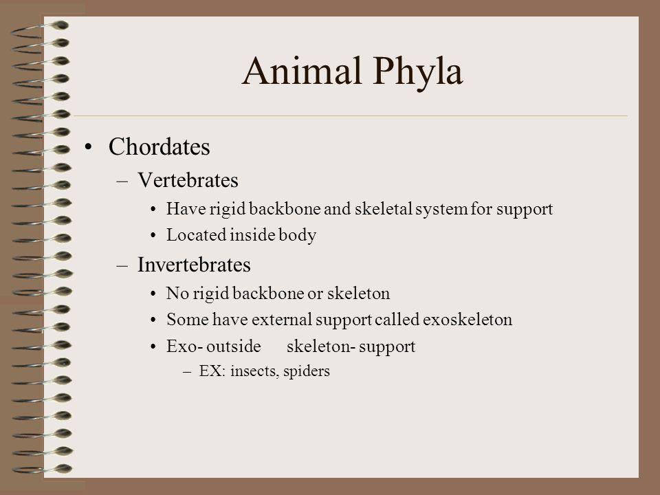Animal Phyla Chordates Vertebrates Invertebrates