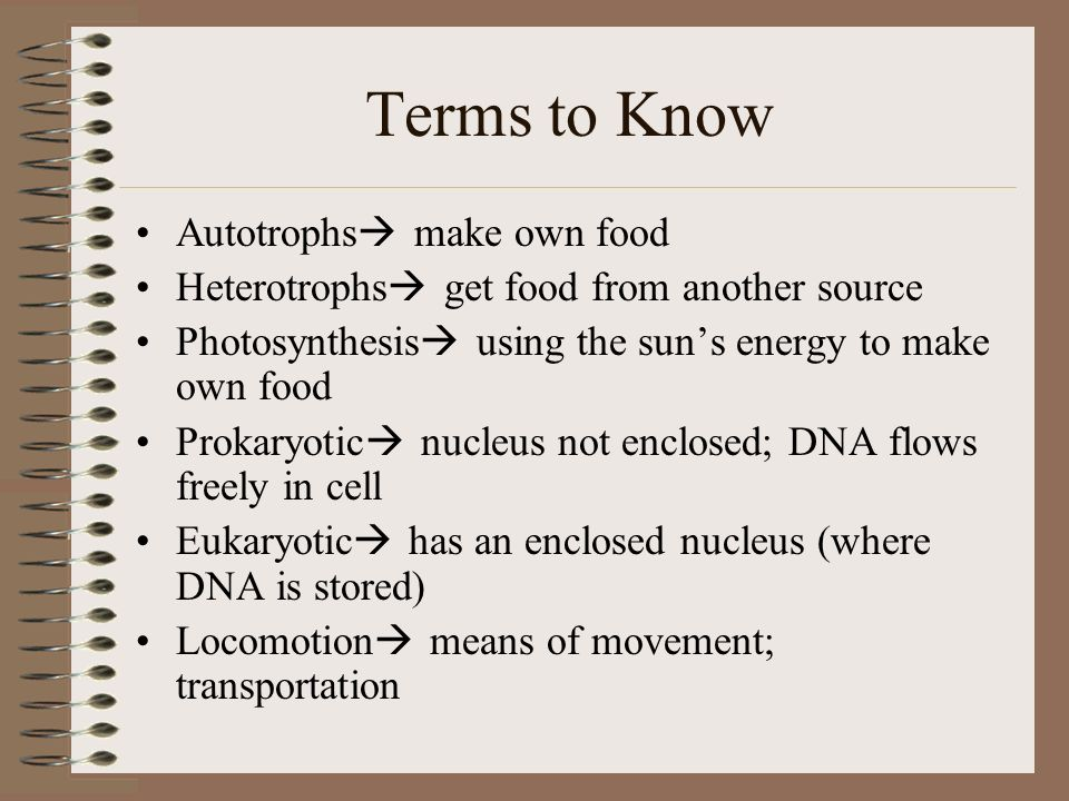 Terms to Know Autotrophs make own food