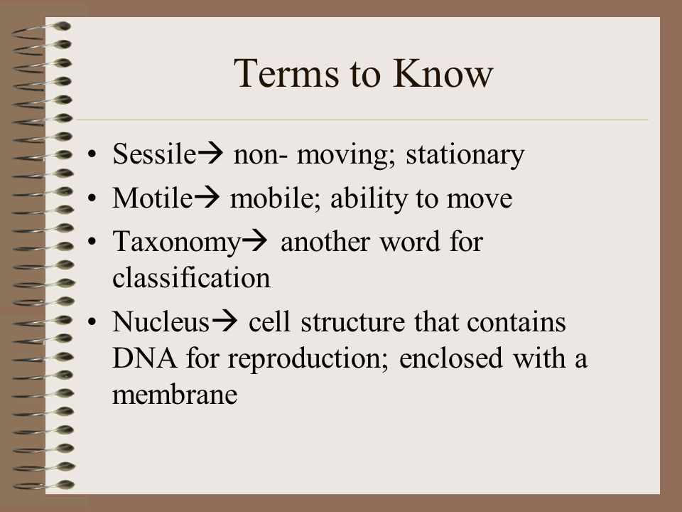 Terms to Know Sessile non- moving; stationary