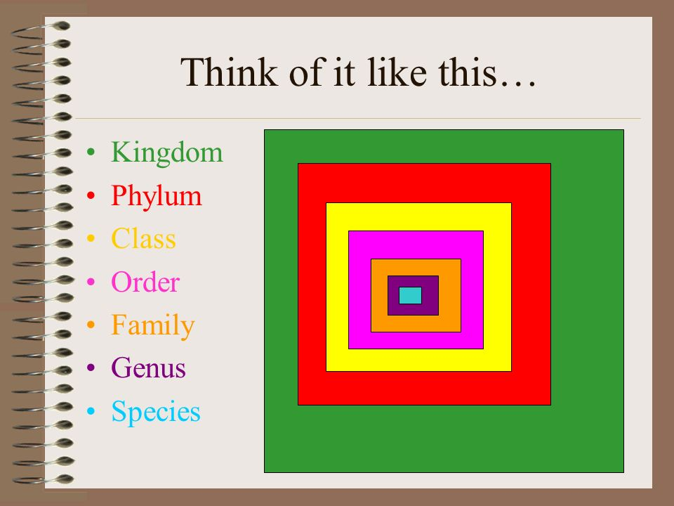 Think of it like this… Kingdom Phylum Class Order Family Genus Species