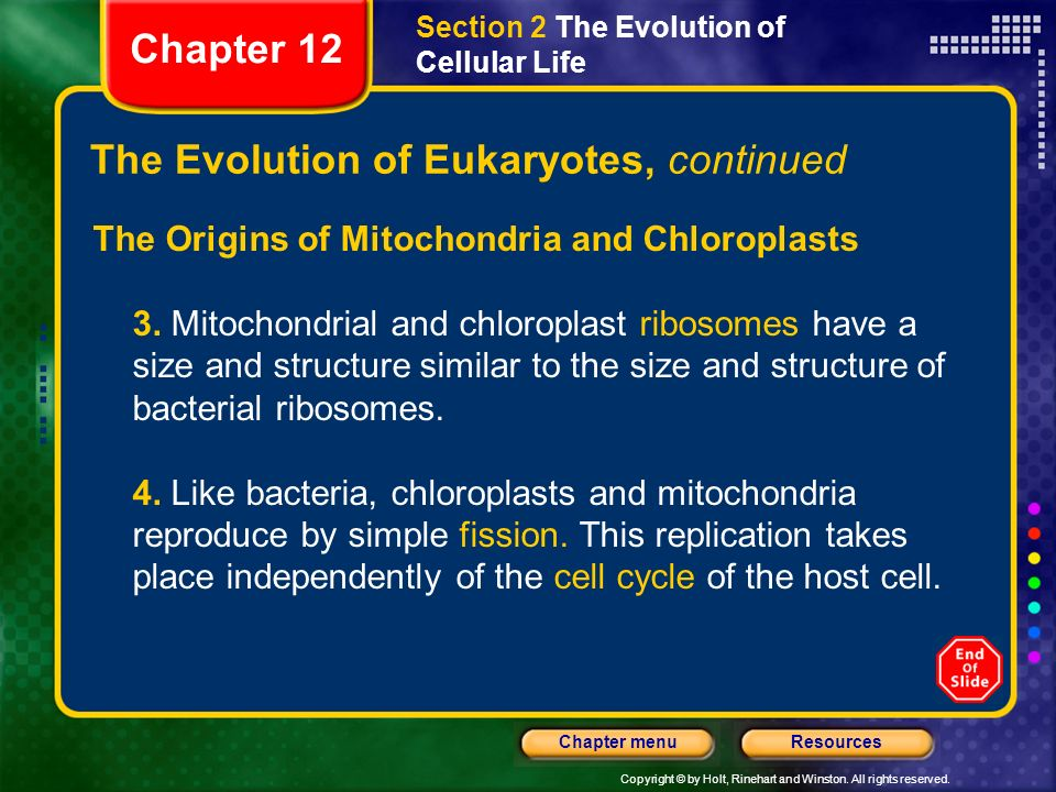 The Evolution of Eukaryotes, continued