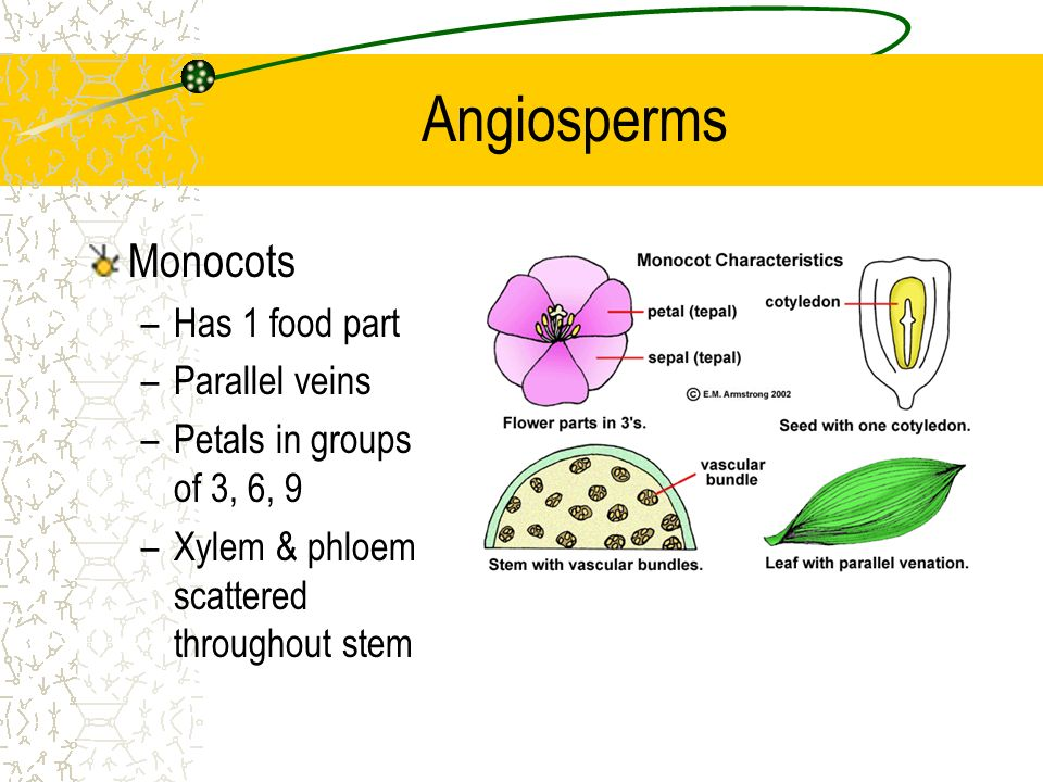 Homework help fruit seeds monocot