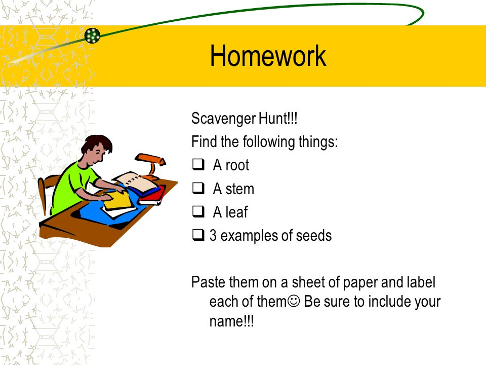 Homework Scavenger Hunt!!! Find the following things: A root A stem