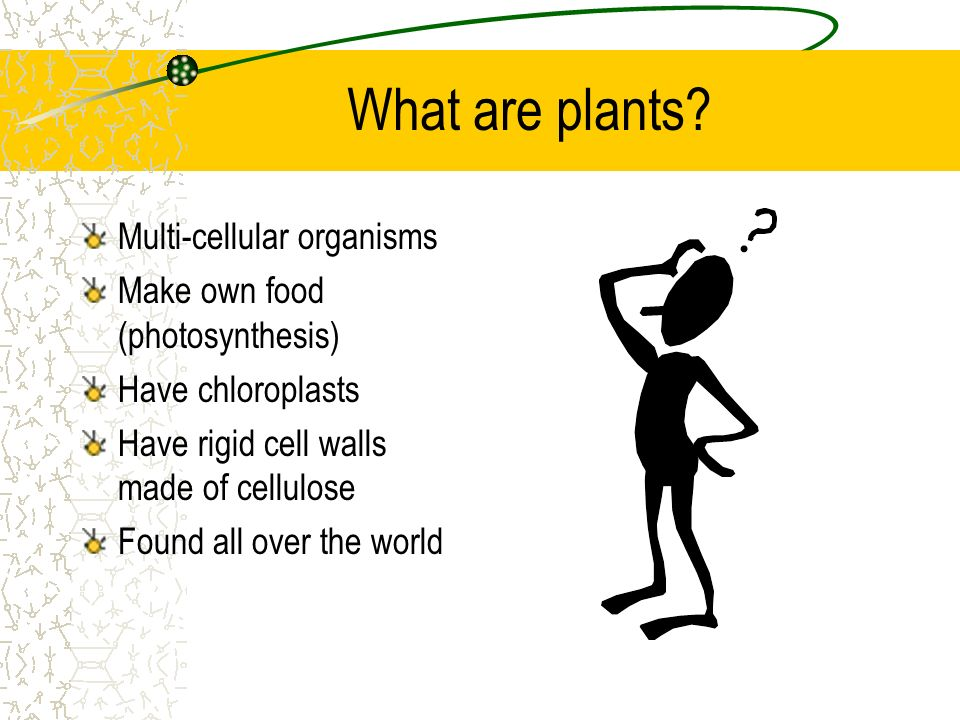 What are plants Multi-cellular organisms