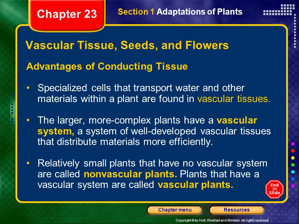 Vascular Tissue, Seeds, and Flowers
