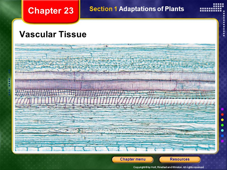 Chapter 23 Section 1 Adaptations of Plants Vascular Tissue