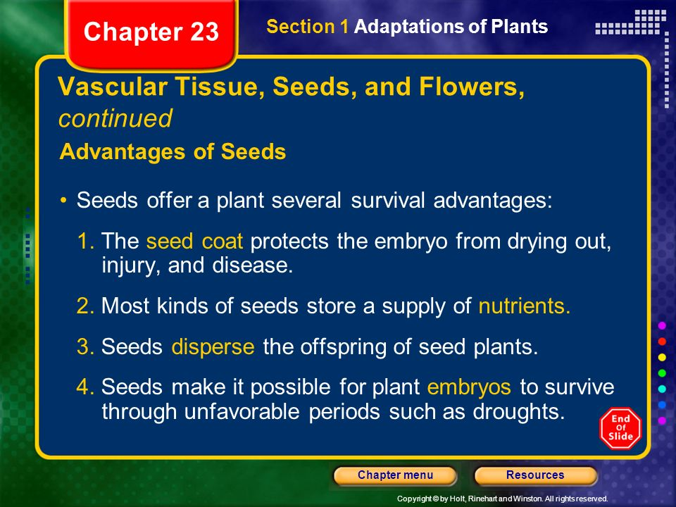 Vascular Tissue, Seeds, and Flowers, continued