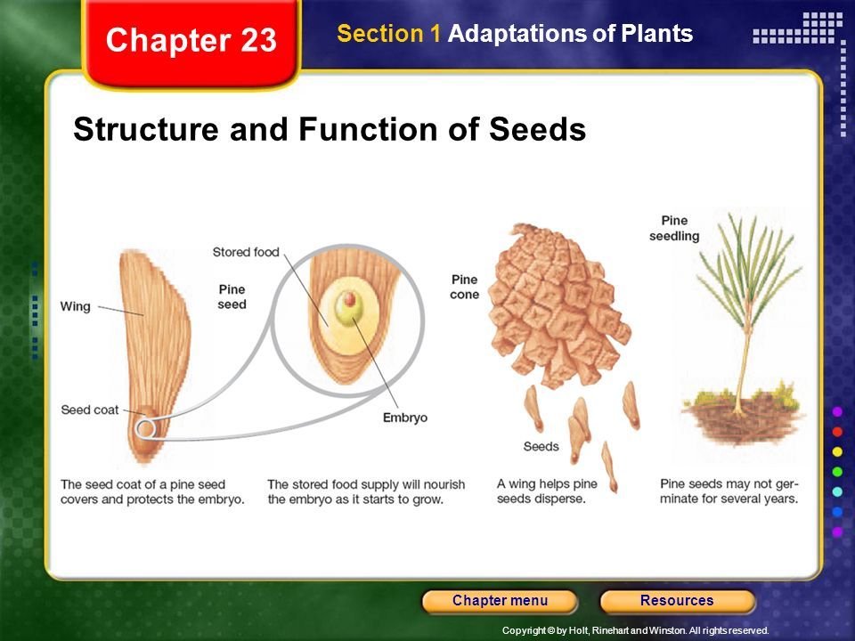 Structure and Function of Seeds
