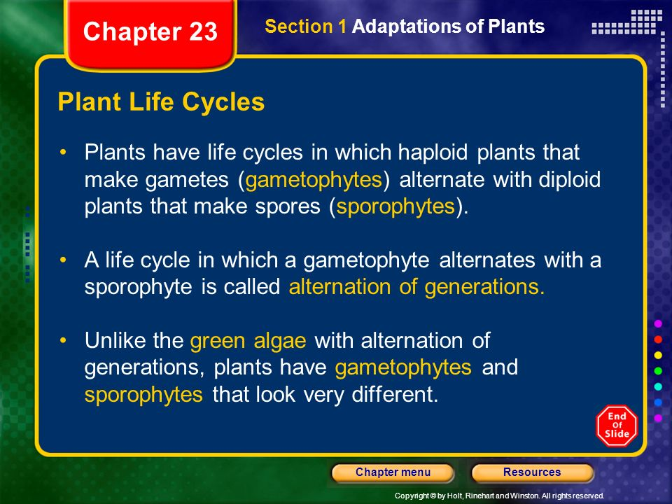 Chapter 23 Plant Life Cycles