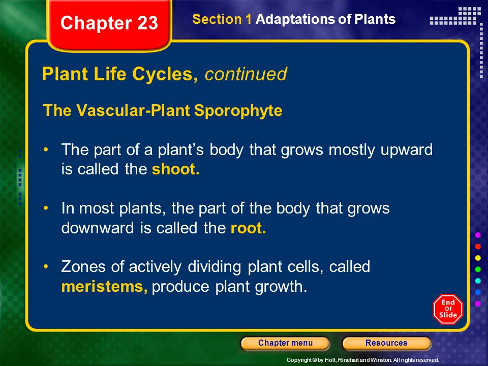 Plant Life Cycles, continued