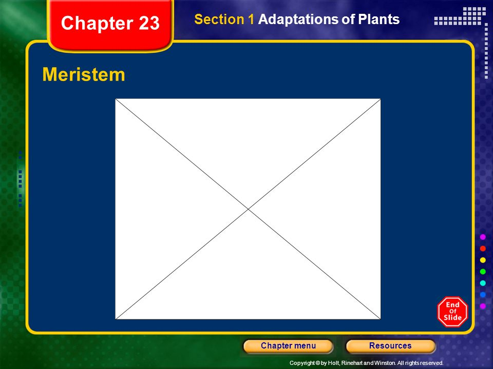 Chapter 23 Section 1 Adaptations of Plants Meristem