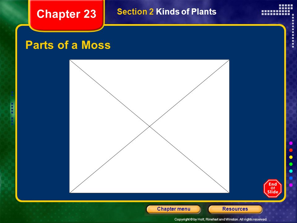 Chapter 23 Section 2 Kinds of Plants Parts of a Moss