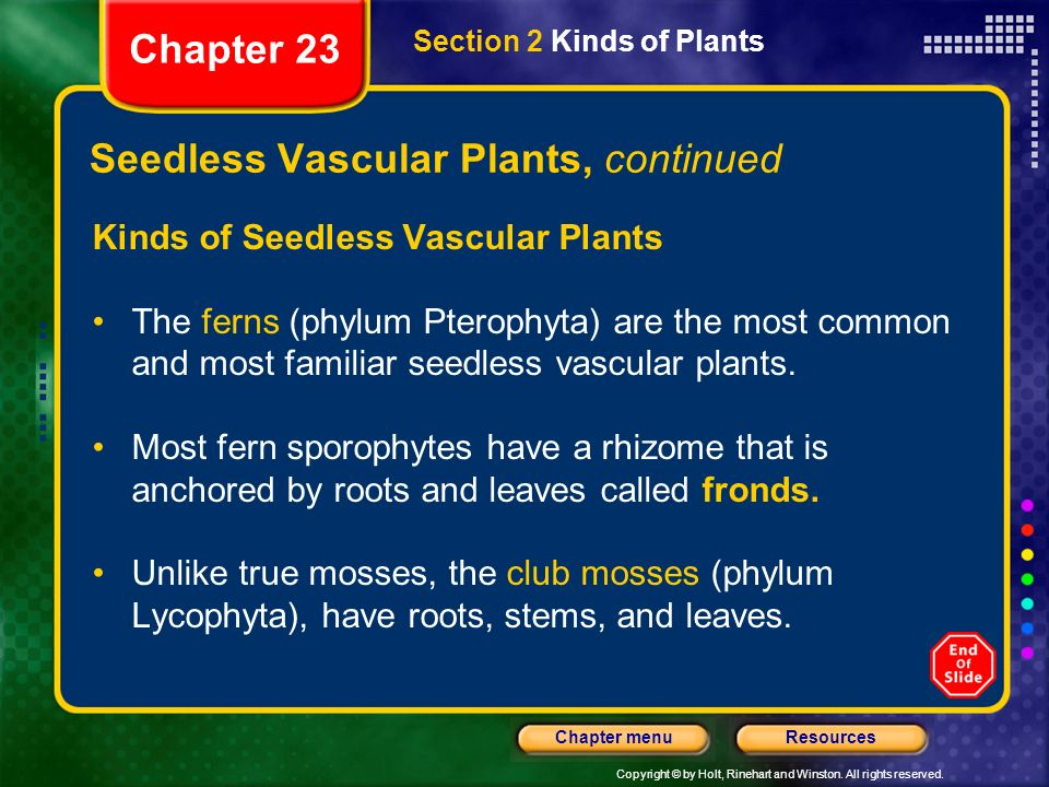 Seedless Vascular Plants, continued