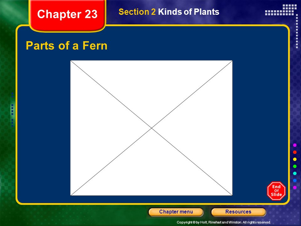 Chapter 23 Section 2 Kinds of Plants Parts of a Fern