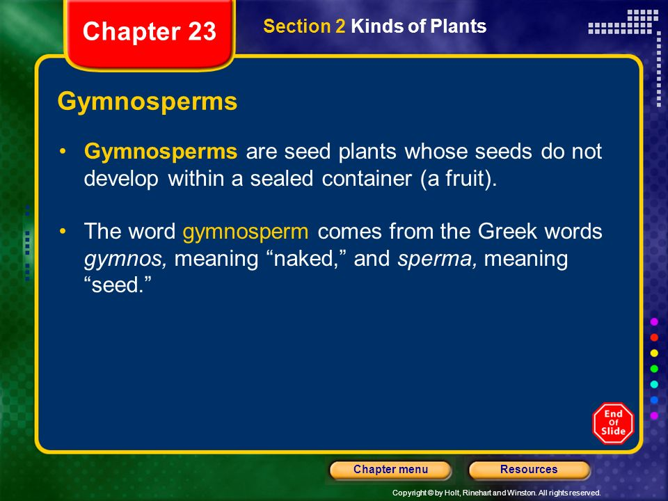 Chapter 23 Section 2 Kinds of Plants. Gymnosperms. Gymnosperms are seed plants whose seeds do not develop within a sealed container (a fruit).