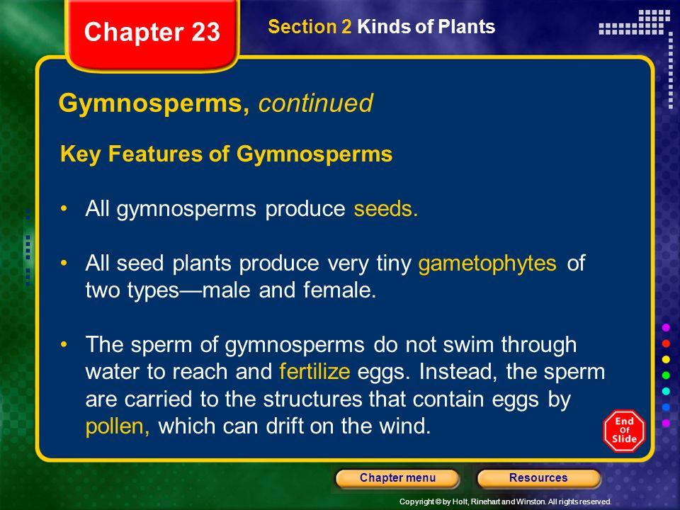 Gymnosperms, continued