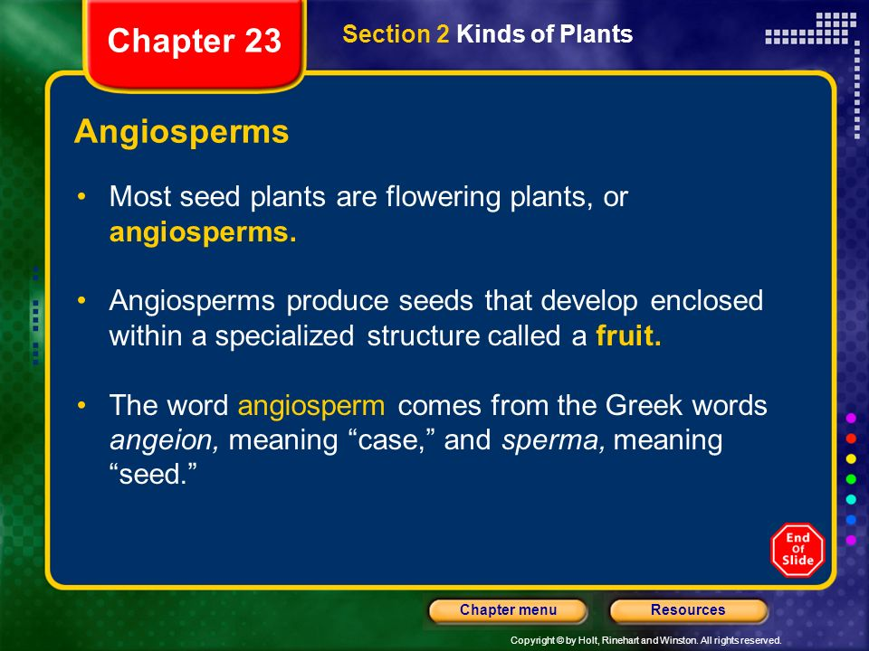 Chapter 23 Section 2 Kinds of Plants. Angiosperms. Most seed plants are flowering plants, or angiosperms.
