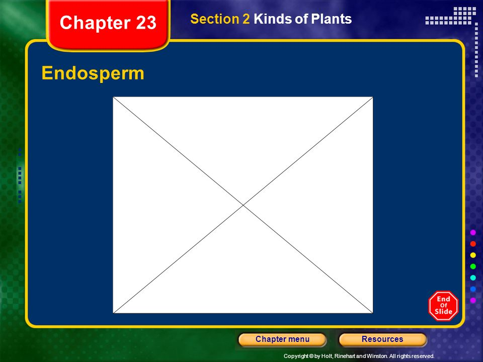 Chapter 23 Section 2 Kinds of Plants Endosperm