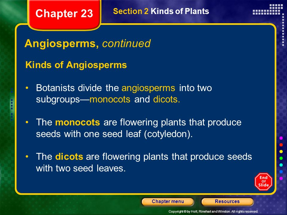 Angiosperms, continued